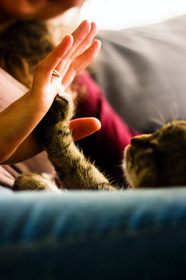 Kitty high five