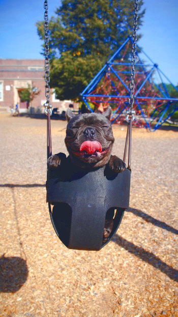 Happy dog on a swing