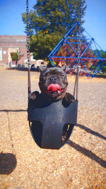 Happy dog on a swing