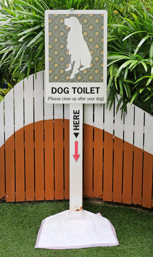 Dog toilet outside