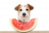 8 Single-Ingredient Treats Your Dog Will Love!