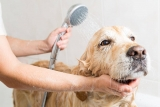 Clean Your Pet Using Wipes & Other Alternatives