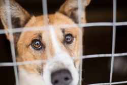 Read our Tips for First-Time Dog Owners If You Plan to Adopt a Dog