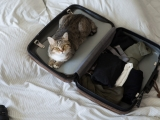 Travel with a Cat in the Car – We Know the Best Tips on How to Make it Easier!