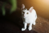 Essential Tips on Bringing a Cat Home for the First Time