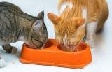 Can a cat eat potatoes?