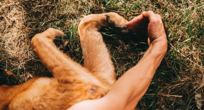 What Dogs Have in Common with People?