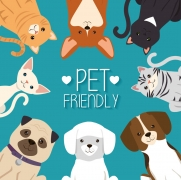 Tips and Tricks on Renting a Pet-Friendly Apartment