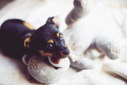 Toilet Training for a Puppy – Quick and Easy Tips for Every Dog Owner