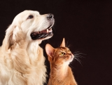 6 Steps to Introduce a New Cat to Your Dog