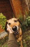 8 Tips for First-Time Dog Owner and Adopter
