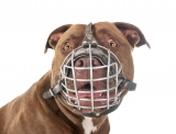 Pitbulls Training and Safety